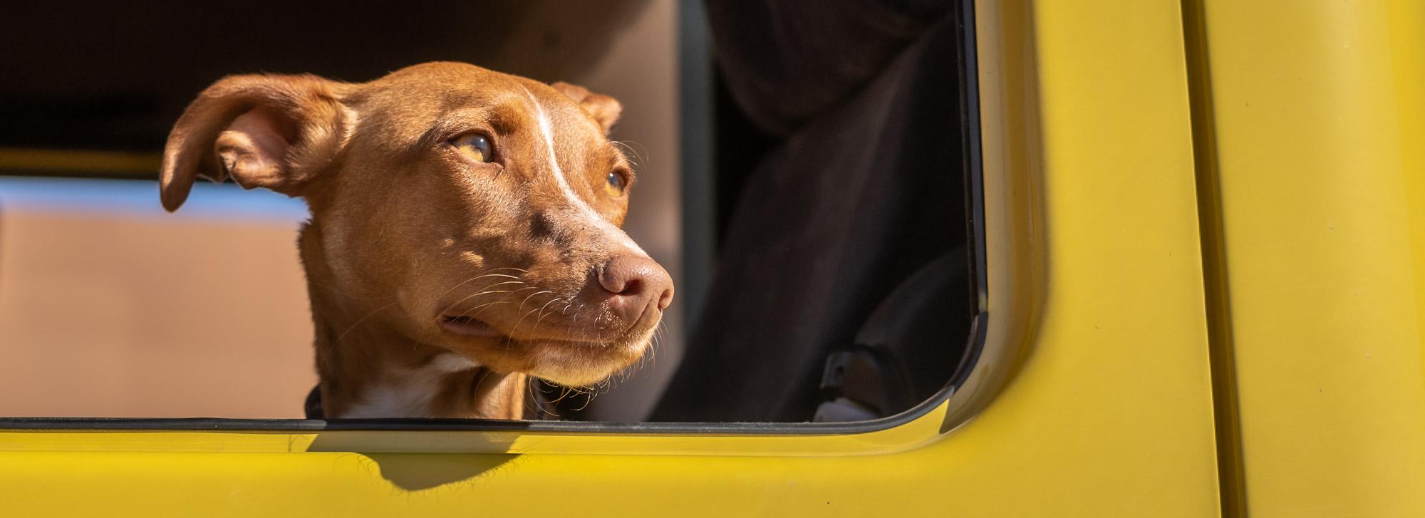Mit Hund im Wohnmobil leben | eine ganz tolle oder ganz schlechte Idee?
